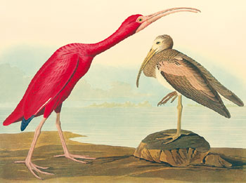 <p><strong>John James AUDUBON (French-American, 1785-1851)</strong></p>